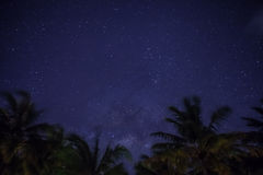 Stars in night sky. Cover with coconut tree at Maldives royalty free stock image