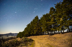 Stars in night sky over trees Royalty Free Stock Images