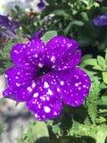 Stars. Night sky purple flower Stock Photo