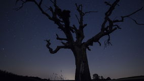 Stars over Tree Time Lapse. Beautiful Time Lapse of stars passing over a dead tree. Shot with motion control system stock video footage