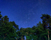 Stars over tree tops. Night sky full of stars over tree tops in the forest Royalty Free Stock Image