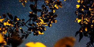 Stars in the sky at night Stock Photography