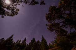 Stars in the Sky at Night. Over the Trees of a Pine Forest Stock Image