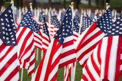 Stars and stripes. American flags (Stars and stripes)  in a park Stock Photo