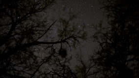 Stars through tree tops stock footage