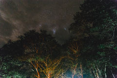 Stars and Trees at Umphang in Tak Province in Northwestern Thailand.  Royalty Free Stock Photos