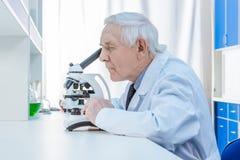 Starsi chemicy z mikroskopem w laboratorium obrazy royalty free