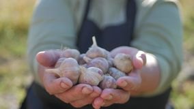 Starsi ogrodniczka chwyty w jego rękach uprawa warzywa na tle ogród Żywność organiczna zbiory wideo