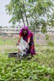 Starsza Bangladeska kobiety podlewania warzyw roślina w z rękami przy Dhaka, Bangladesz fotografia stock