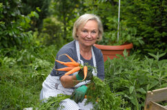 Starsza dama przy Ogrodowymi mienie marchewkami fotografia stock