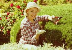 Starsza kobieta żyłuje zielonego żywopłot Zdjęcia Stock