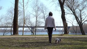 Starsza kobieta chodzi w wiosna parku z małym psem zbiory