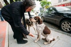 Starsza kobieta daje ręce bezdomny pies na ulicie Obrazy Stock