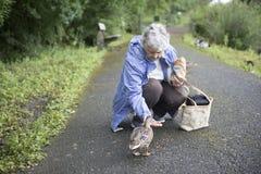 Starsza kobieta karmi kaczki Zdjęcia Royalty Free