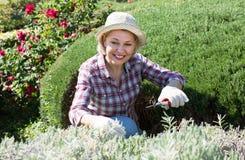 Starsza kobieta pracuje w ogródzie Obrazy Stock