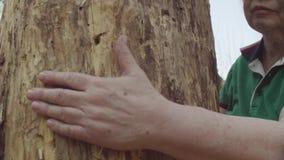 Starsza kobiety ręka ściska uszkadzającego drzewa zbiory wideo
