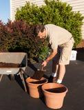 Starsza mężczyzna głębienia ziemia w wheelbarrow Obraz Stock
