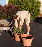 Starsza mężczyzna głębienia ziemia w wheelbarrow Obrazy Stock