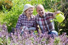 Starsza para pracuje w ogródzie Zdjęcia Royalty Free