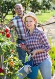 Starsza para pracuje w ogródzie Obrazy Royalty Free