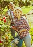 Starsza para pracuje w ogródzie Fotografia Stock