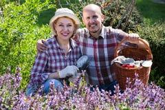 Starsza para pracuje w ogródzie Zdjęcie Stock