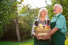 Starsze osoby pary i jabłko kosz zdjęcie stock
