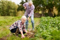 Starsze pary flancowania grule przy ogródem lub gospodarstwem rolnym Zdjęcie Royalty Free