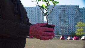 Starszego aktywisty mienia młody drzewo w mieście zbiory