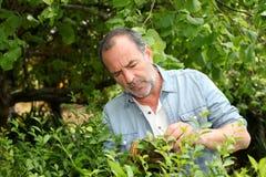 Starszego mężczyzna tnące rośliny w domu ogródzie Zdjęcie Stock
