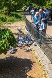 Starszej osoby pary żywieniowi gołębie w St James parku Londyn zdjęcia stock