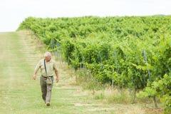 Starszy agrarny odprowadzenie na polach Fotografia Royalty Free