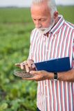 Starszy agronom lub średniorolne egzamininuje ziemi próbki w polu zdjęcia stock