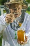 Starszy apiarist sprawdza jego miód w pasiece fotografia royalty free