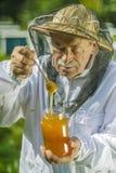 Starszy apiarist sprawdza jego mi?d w pasiece obraz royalty free