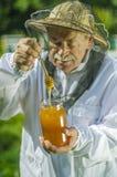 Starszy apiarist sprawdza jego mi?d w pasiece obrazy stock