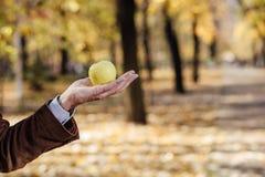 Starszy dorosły mienie zieleni jabłko Fotografia Stock