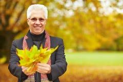 starszy liść mężczyzna klon fotografia royalty free