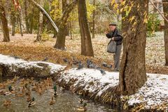 Starszy mężczyzna karmi kaczki na brzeg staw w spadku Rosja, Ramenskoye, Październik 2017 Zdjęcia Stock
