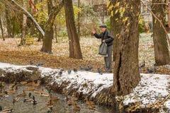 Starszy mężczyzna karmi kaczki na brzeg staw w spadku Rosja, Ramenskoye, Październik 2017 Obrazy Stock
