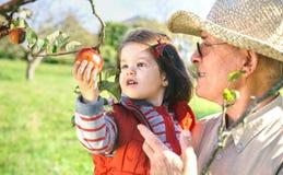 Starszy mężczyzna trzyma uroczego małej dziewczynki zrywanie fotografia stock