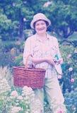 Starszy ogrodniczka kosz obrazy royalty free