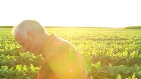 Starszy rolnik w śródpolnej egzamininuje uprawie zdjęcie wideo