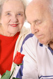 starszyzna stary rose zapach Zdjęcie Royalty Free