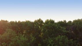 Start über großem grünem Feld am Abend stock video footage