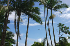 Start über Tropeninsel Stockbilder