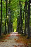 Start of autumn / fall park footpath. Footpath in a park in autumn environement, fall, autumn scenery stock photos