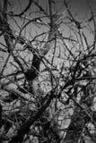 Start av nedgångar och kala träd Fotografering för Bildbyråer