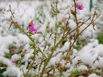 Start av vintern Arkivbilder
