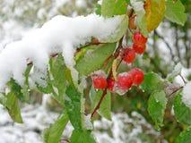 Start av vintern Arkivfoto